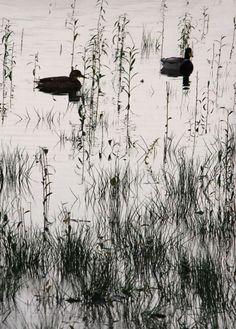 #engicards #ducks #lesdeuxcanard #messagefromtheuniverse