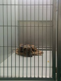6-20: Peter was given up by his family and is absolutely terrified in the shelter. He is too scared to come out and just sits in his cage shaking. He does love other dogs though! Seeking rescue or foster at the Evanston Animal Shelter, 847-866-5080, or alisa.kaplan@gmail.com.  Evanston, IL. https://www.facebook.com/photo.php?fbid=10154322205660601set=a.10151777193885601.862752.655425600type=1theater