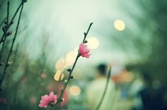 Nature in spring by Chee Aki, via Behance A fresh bud A spring flower out of the rain into intrinsicity