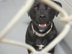 Sunshine •  Labrador Retriever Mix  •  Adult • Female • Medium •  Clermont County Humane Society •  Batavia, OH