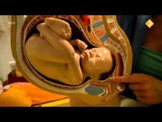 Het Klokhuis: De geboorte op een zeer duidelijk manier uitgelegd aan kinderen