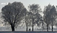 A cyclist is pictured in a snowy landscape near Eichenau, southern Germany, on a sunny January 23, 2017. Christof STACHE / AFP