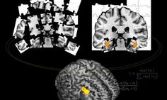 Switching On One-Shot Learning in the Brain - http://bioengineer.org/switching-on-one-shot-learning-in-the-brain/