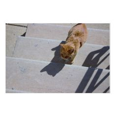 #Cat on Steps Poster - #Petgifts #Pet #Gifts #giftideas #giftidea #petlovers
