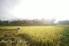 Maichau are a peaceful, charming valley surrounded green rice fields, rivers...