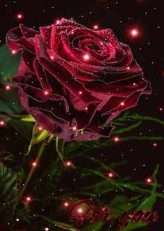 The red Rose is for you sweetie  <3 I love you <3