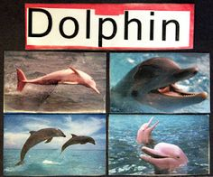 Dolphin activities, resources and free printables for an ocean theme #preschool