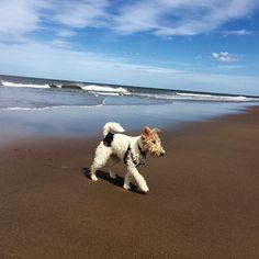 Enjoying my day at the beach!