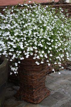 Garden Nina Balthau, Belgium