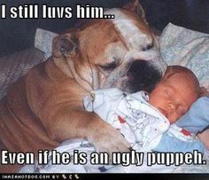 Most most likely because they are two of the most popular pet dog breeds in America according to the American Kennel Club. Bulldog Meme, Bulldog Quotes, Bulldog Pics, Bulldog Puppies, Cute Puppy Breeds, Cute Puppies, Dog Breeds, Cute Dogs, Cute Baby Animals