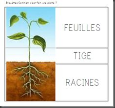 image plante Petite Section, La Germination, Montessori, French Classroom, Plant Science, Kindergarten Science, French Language Learning, Plantation, Learn French