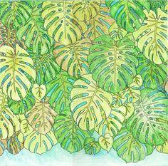 Jade Gedeon Rainforest Escape coloring book