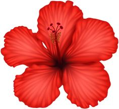 Most recent No Cost Hibiscus png Tips Hibiscus plants are tropical beauties that will provide an exotic look for your garden. Tropical Flowers, Hawaiian Flowers, Hibiscus Flowers, Exotic Flowers, Beautiful Flowers, Hibiscus Clip Art, Lilies Flowers, Flowers Garden, Purple Flowers