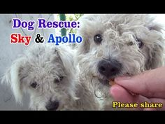 the cutest rescue video : ) Sky & Apollo rescued while the Endeavour space shuttle flies over us - a MUST SEE.  Please share.