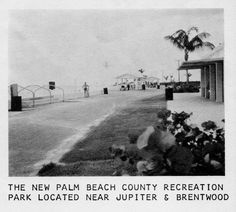"""Check out Carlin Park Beach! How small all of the vegetation is; now the seagrapes are so high that one cannot see the ocean from the picnic tables. Wish they would be trimmed back. (Mid 60's) [from Betty Blackwell White on Rob Thompson's fb group """"Jupiter Old Days.""""] Vintage Florida, Old Florida, Juno Beach Pier, Jupiter Florida, Picnic Tables, Palm Beach County, Genre, Old Photos, Past"""