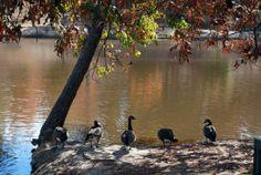 Deer Lick Park Douglasville, GA