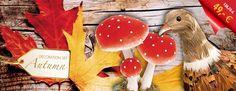 """Jetzt bei der Herbstdeko sparen. Mit unserem #Deko-Set """"Herbst"""" sparen Sie 60%  Jetzt zugreifen: http://abama.de/index.php/dekoset-herbst.html?___store=german #Schaufensterdekoration #Dekorationsartikel #Dekoration #Herbstdekoration #abamaDeco #Dekorieren #HerbstSchaufenster #HerbstlichDekorieren"""