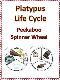 Platypus Life Cycle $