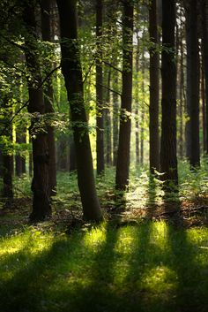 Deep forest by Alan MacKenzie Beautiful Forest, Beautiful World, Beautiful Places, Enchanted Wood, Deep Forest, Forest Light, Walk In The Woods, Belle Photo, The Great Outdoors