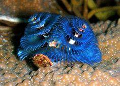The Underwater World of Corals