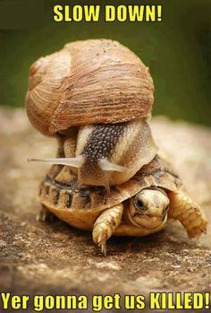 This turtle is really movin'