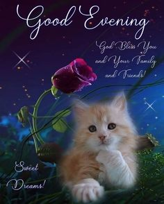 Sitting Cat - Good Evening Quote evening good night good evening good evening quotes and sayings evening picture quotes Good Night Cat, Good Morning Cat, Good Night Sleep Well, Good Night To You, Good Night Prayer, Good Night Blessings, Good Morning Flowers, Good Night Sweet Dreams, Good Evening Messages