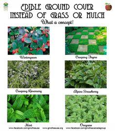 A great alternative to grass or mulch that you may not have considered - plant an edible ground cover. Mint, Creeping thyme, Alpine Strawberry, Creeping Rosemary, Oregano, Wintergreen - even the berries are edible. They look great, too!