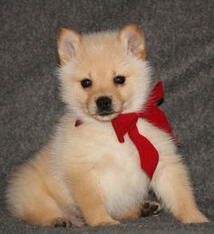 Best Cuby Chubby Adorable Dog - 0627b5486bae5061b241b55d6135d72e  Perfect Image Reference_272640  .jpg