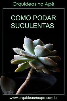 Planting Succulents, Garden Plants, Cactus Terrarium, Plants Are Friends, Cactus Y Suculentas, Container Gardening, Herbalism, Flora, Backyard