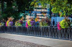 Jak ukwiecić mosty? Skrzynie kwiatowe do zadań specjalnych - Inspirowani Naturą Flower Boxes, Flowers, Cities, Deck, Urban, Outdoor Decor, Home Decor, Window Boxes, Decoration Home