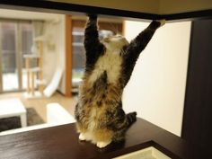 maru holding up the ceiling