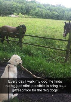 Funny Animal Memes, Cute Funny Animals, Funny Cute, Funny Dogs, Funny Memes, Funny Videos, Hilarious Sayings, Animal Captions, 9gag Funny
