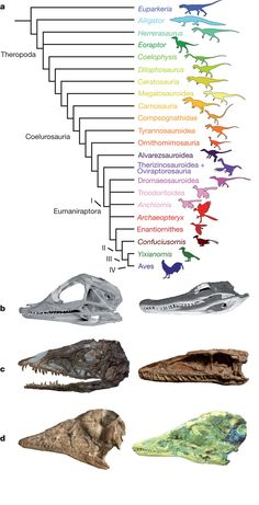 Archosaur phylogeny and ontogeny. Nature, Nature Publishing Group #dinosaurs