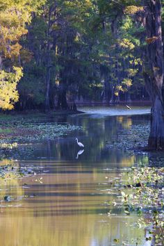 Bayou country...