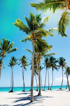 This is what paradise is #tropical #vacation #summer