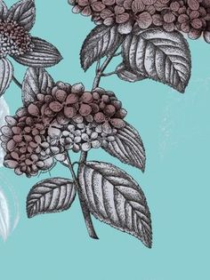 Cole & Son Ortensia from the Fornasetti Collection Free Samples Uk, Cole And Son, Designer Wallpaper, The Selection, Fabric, Wallpapers, Collection, Tejido, Tela