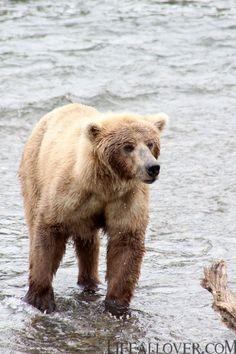5 things to do around Homer Alaska