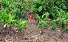 英国の先住民支援団体サバイバル・インターナショナル(Survival International)が公開したブラジル先住民の写真(撮影日不明、2011年1月31日公開)。(c)AFP/Survival International/FUNAI/Gleison Miranda ▼2Feb2011AFP|アマゾン先住民の新たな写真を公開、保護への関心高める狙い http://www.afpbb.com/articles/-/2784112