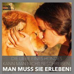 Die Liebe eines Hundes...