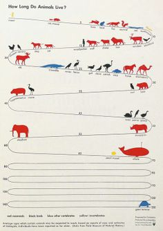 How long do animals live?  #biology #science @IFLS