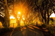 dark hedges tunnel d arbres de game of thrones 5   Dark Hedges   Le tunnel darbres de Game of Thrones   tunnel photo image GOT game of thron...