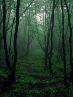 Mist. Fog. Forests. Iran, Gilan, Masouleh forest.