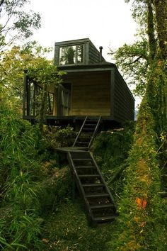 Tree house in the Patagonia fjords