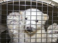 CUUUUUUUTTTTE!!!!!!Polar bear cub's incredible saga