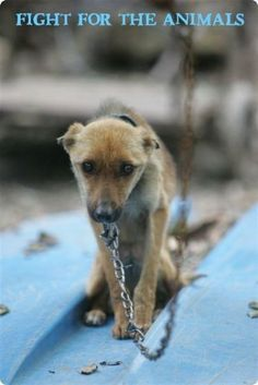 No dog should ever be left on a chain. It's cruel and unjust.