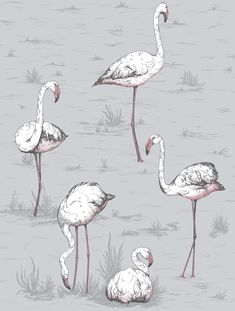 Flamingos Lilac Grey and Bronze wallpaper by Cole & Son