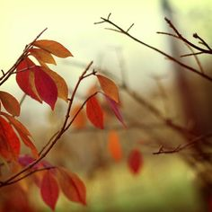 oh fall, how I've missed you.... someday I will see you again.