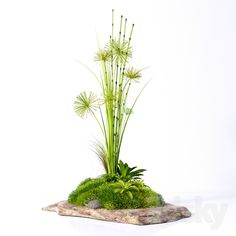 Decorative plants on a stone