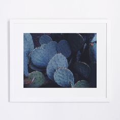 "Lani Trock Prickly Pear Paddles Procreate Patiently Photograph Tappan Exclusive Limited Edition  12""x16"", Edition of 50 $100 Unframed, $190 Framed"