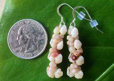 Rare Momi Kahelelani Shell Earrings Kahelelani Shells Hand Collect Eco Friendly…